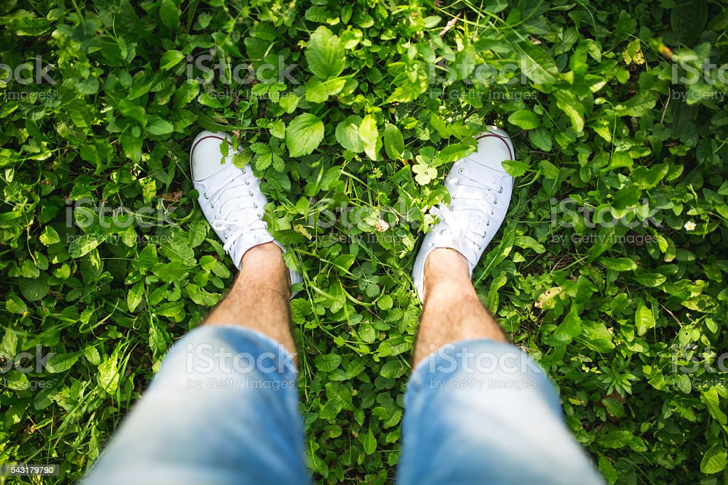 In the green grass stock photo