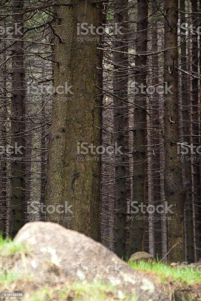 In the Harz Mountains stock photo