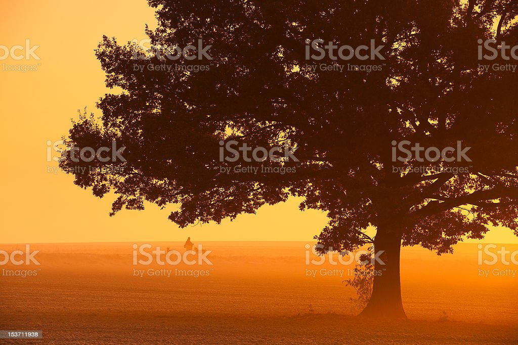 In the mist royalty-free stock photo