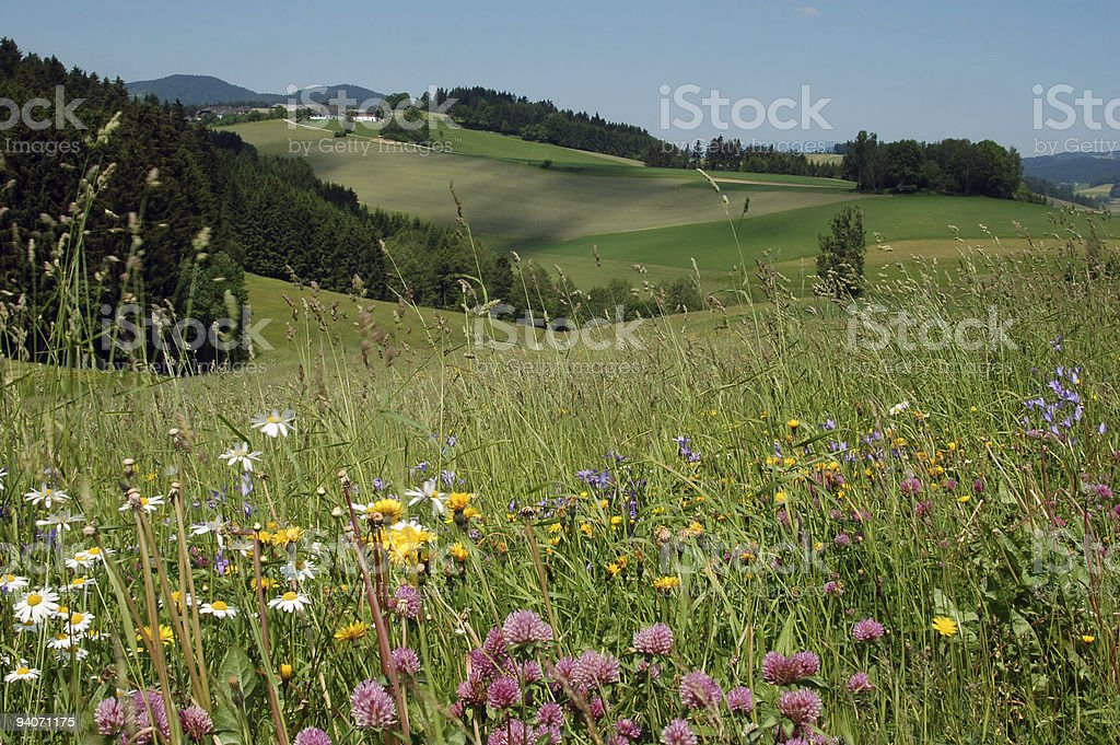 In the Open Countryside royalty-free stock photo