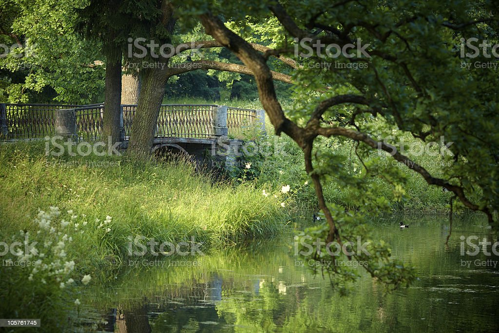 In the park royalty-free stock photo