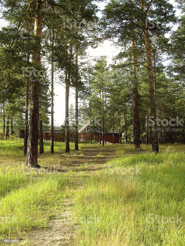 In the pines royalty-free stock photo