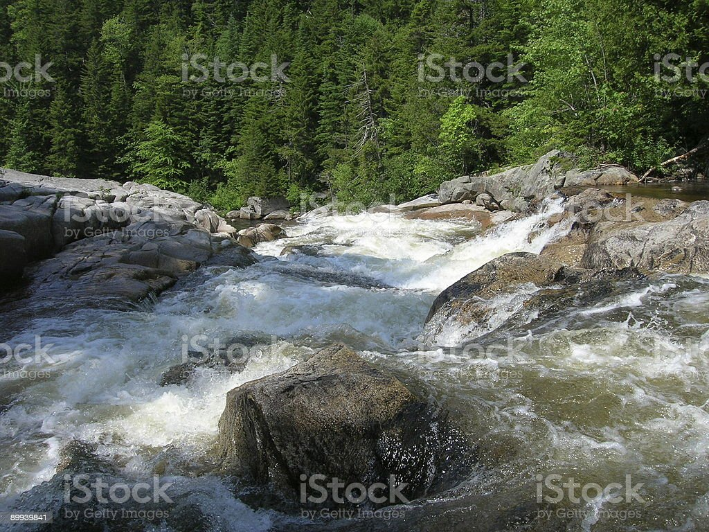 In the river royalty-free stock photo