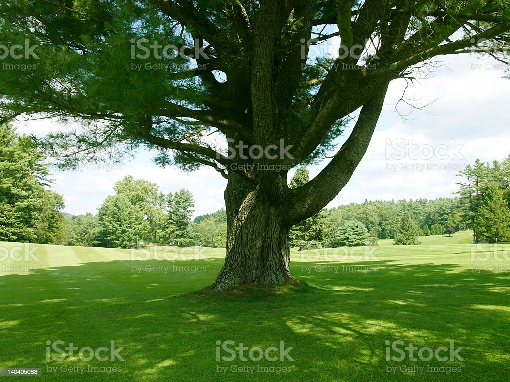 In the Shade royalty-free stock photo