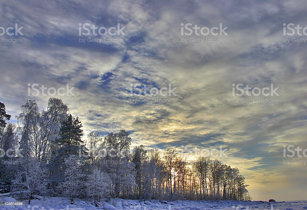 in the snow birch forest royalty-free stock photo