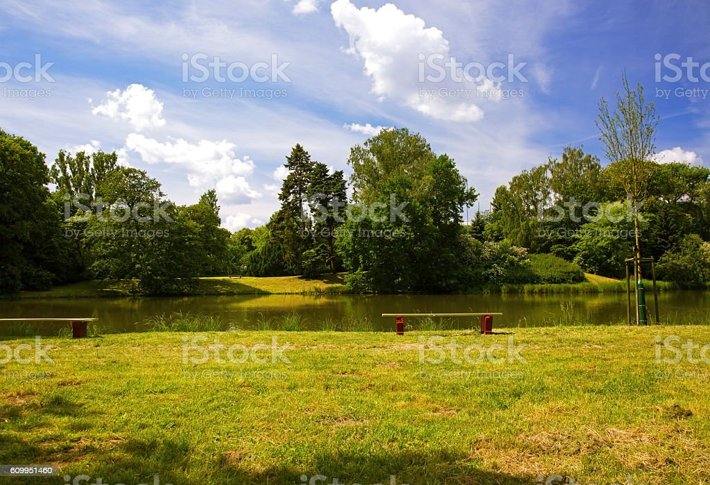 In the summer park stock photo