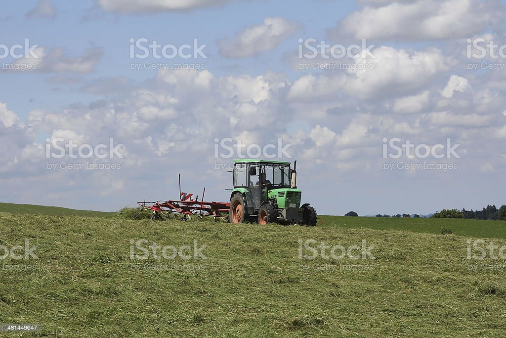in the summer stock photo