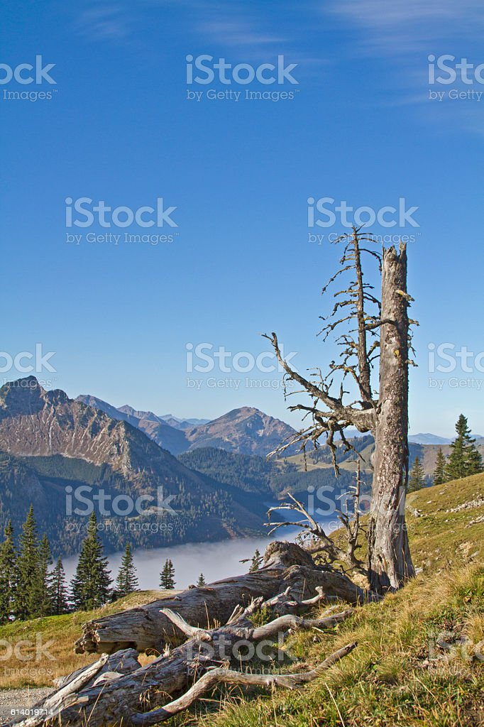 In the  Tannheim Valley in Tyrol stock photo