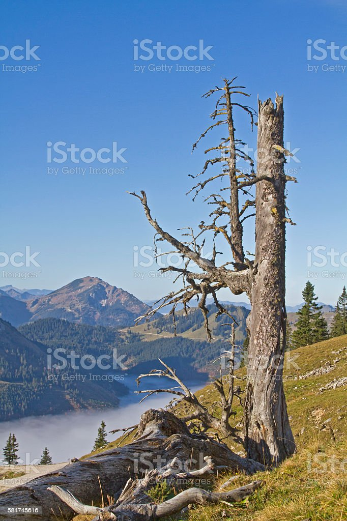 In the the Tannheim Valley in Tyrol stock photo