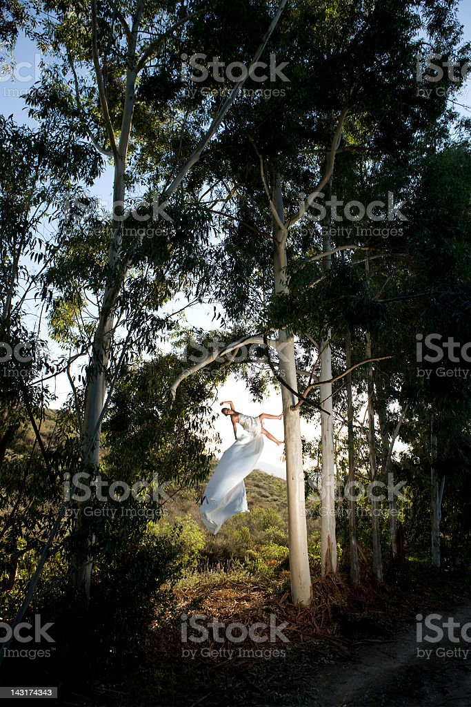 In the Trees royalty-free stock photo