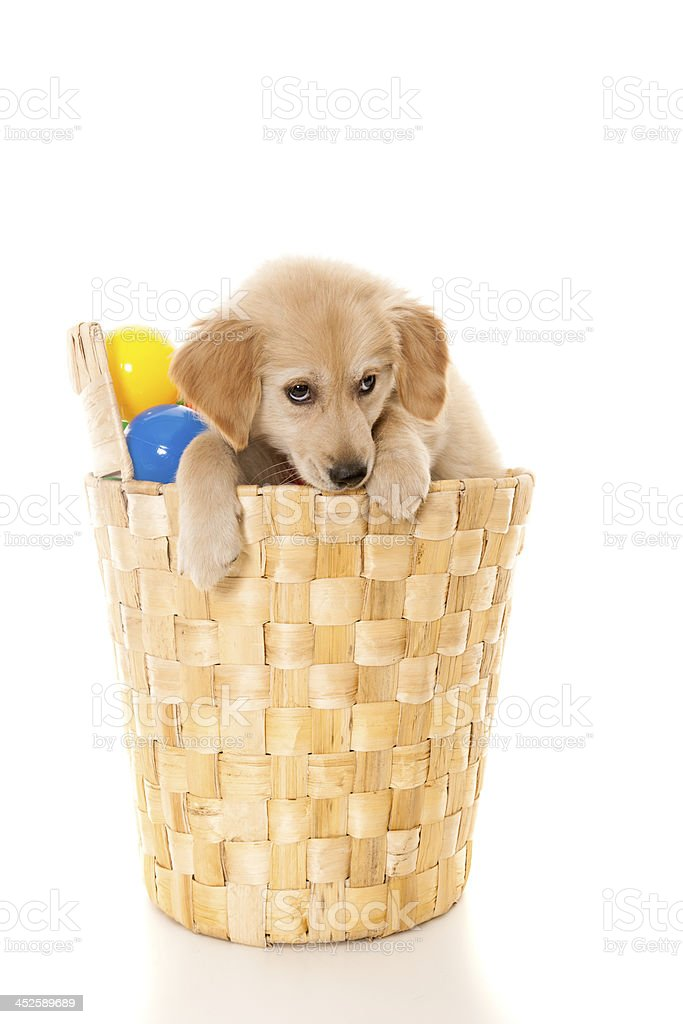 in the washing basket royalty-free stock photo