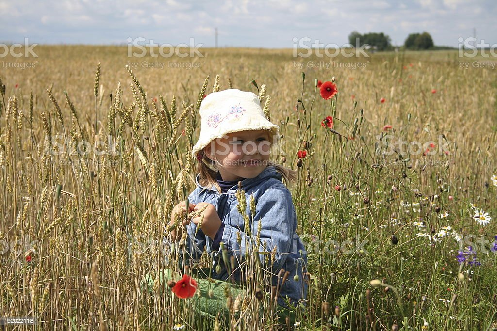 In the wheat field royalty-free stock photo