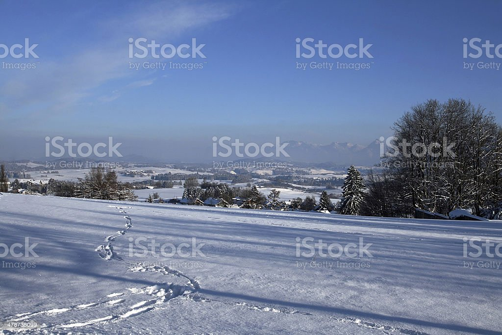in the winter royalty-free stock photo