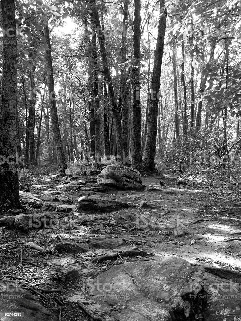 In The Woods royalty-free stock photo