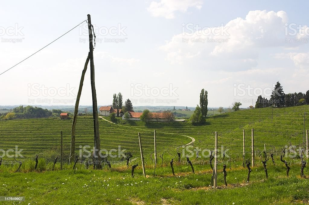 in vineyards royalty-free stock photo