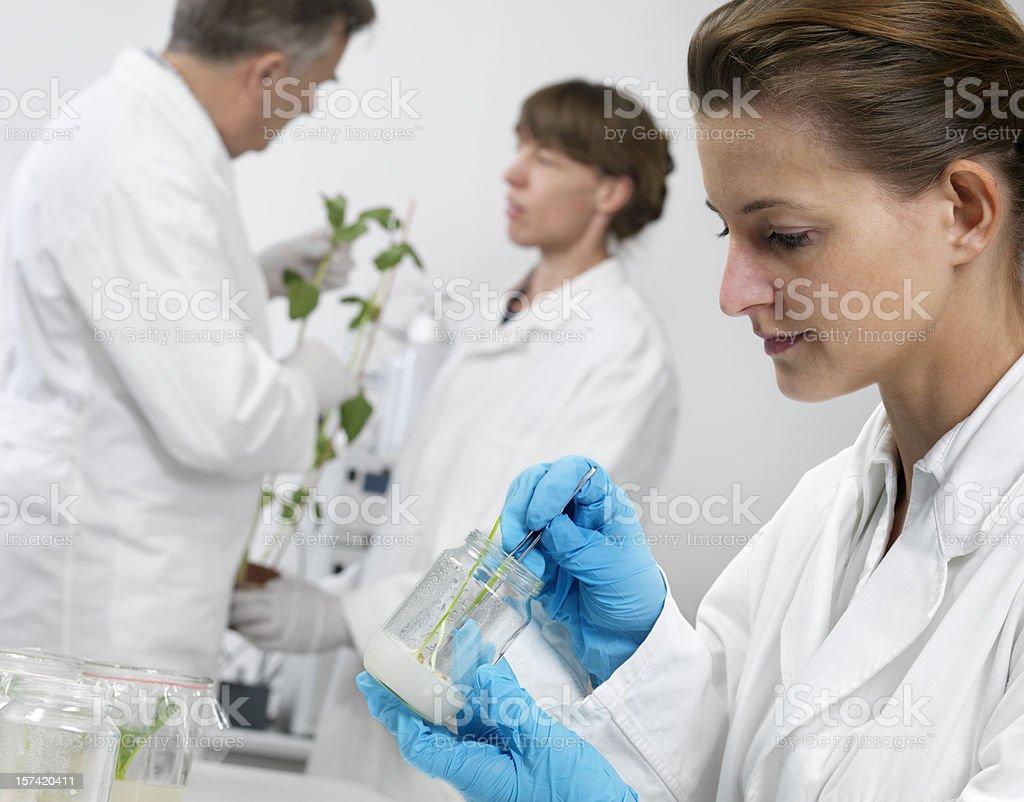 In vitro experiment royalty-free stock photo