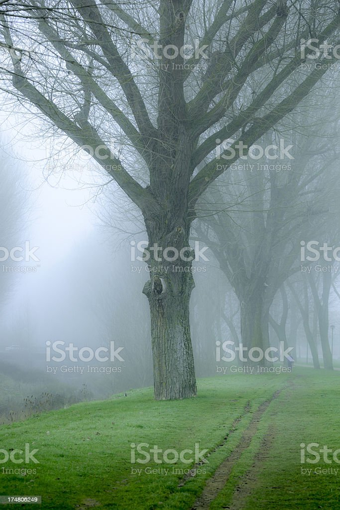 In winter royalty-free stock photo