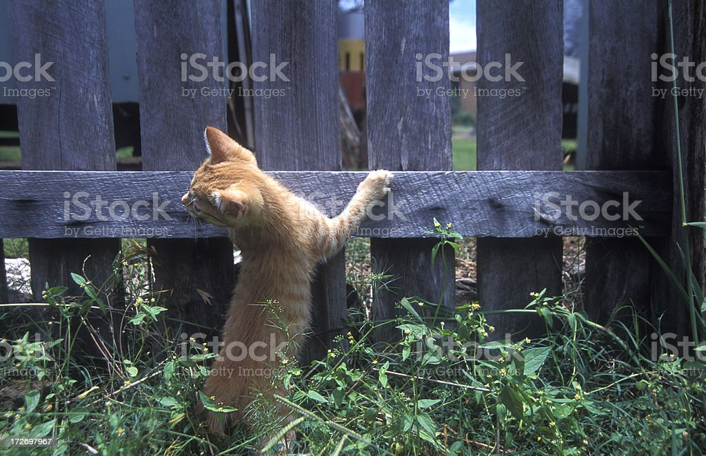 incarcerated kitten stock photo