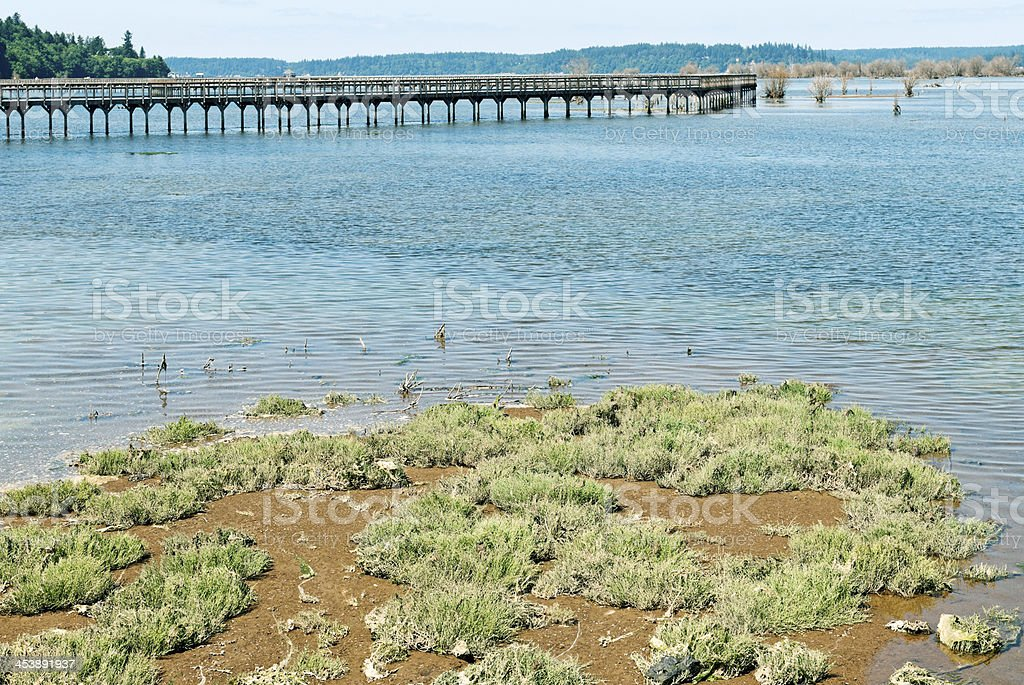 Incoming tide and boardwalk at restored estuary in Washington state stock photo