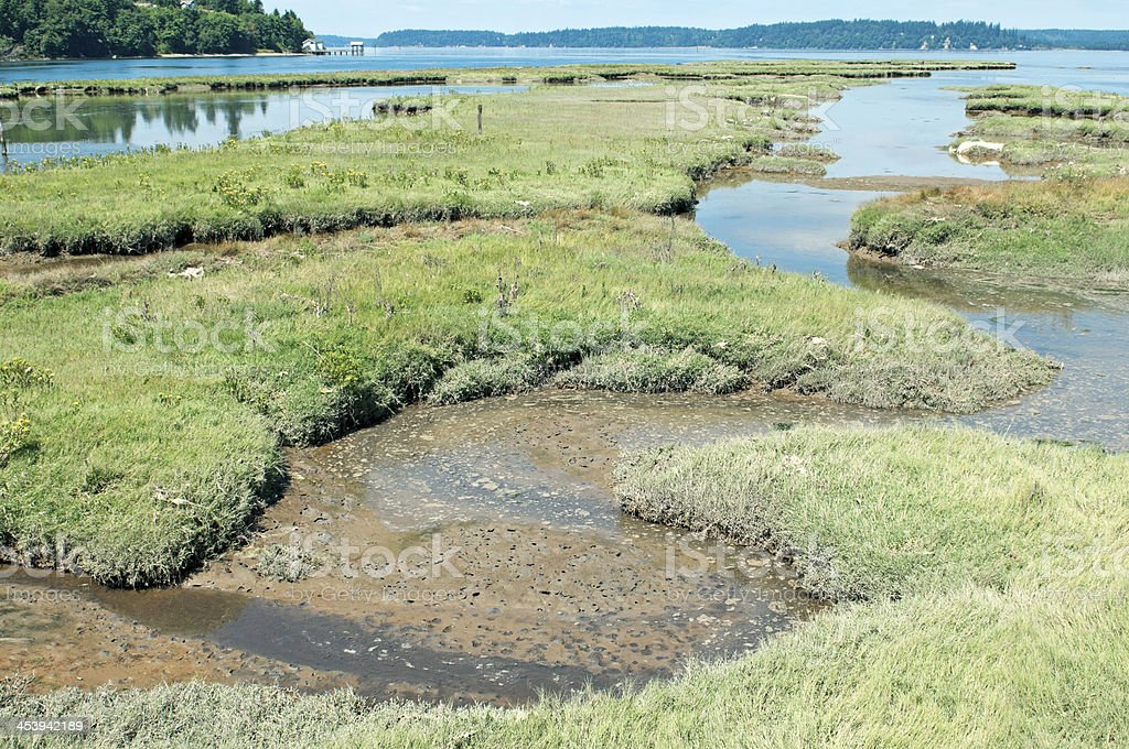 Incoming tide to restored estuary at Nisqually delta in Washington stock photo