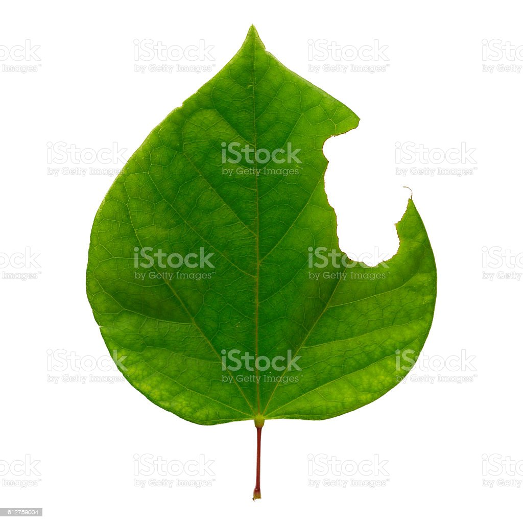 Incomplete heart shaped green leaf stock photo