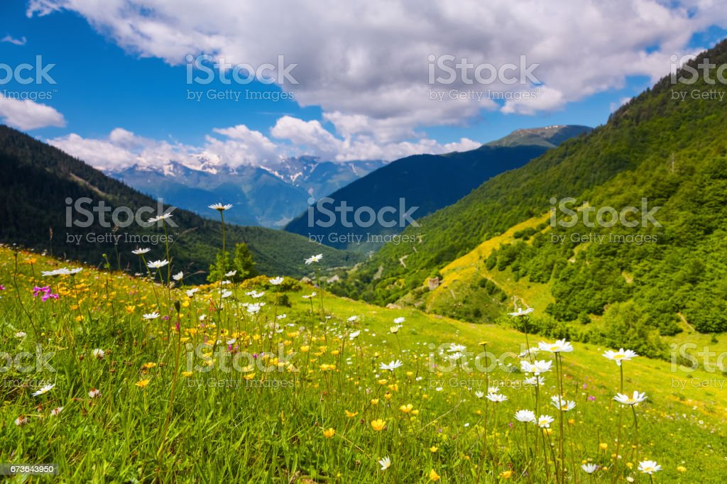 Incredible landscape with high rocky mountains with snowy tops and green lawns with yellow flowers. Upper Svaneti, Georgia, Europe. stock photo