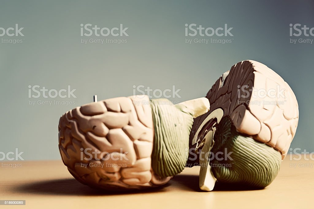 Indecision! Can't make up your mind with a split brain stock photo