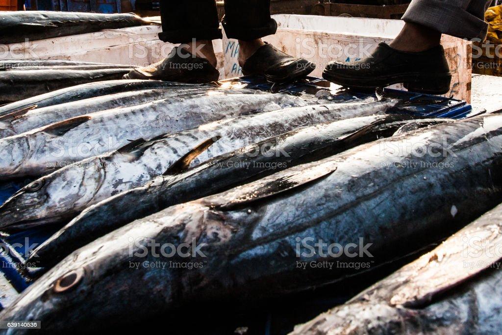 India Goa Fish stock photo