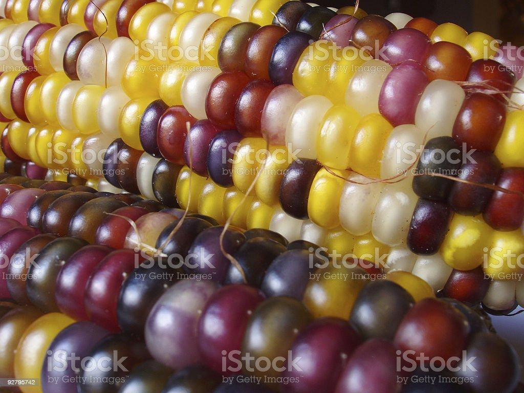 Indian Corn 3 royalty-free stock photo