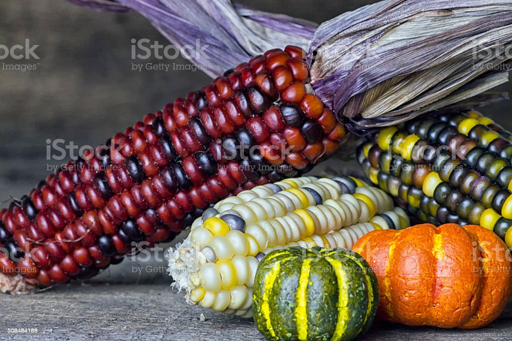 Indian Corn and Autumn Squash on Wood Background stock photo