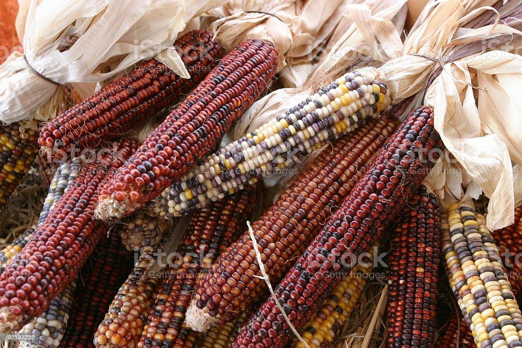 Indian Corn at Farmer's MArket royalty-free stock photo
