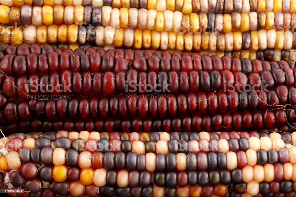 Indian Corn Background royalty-free stock photo