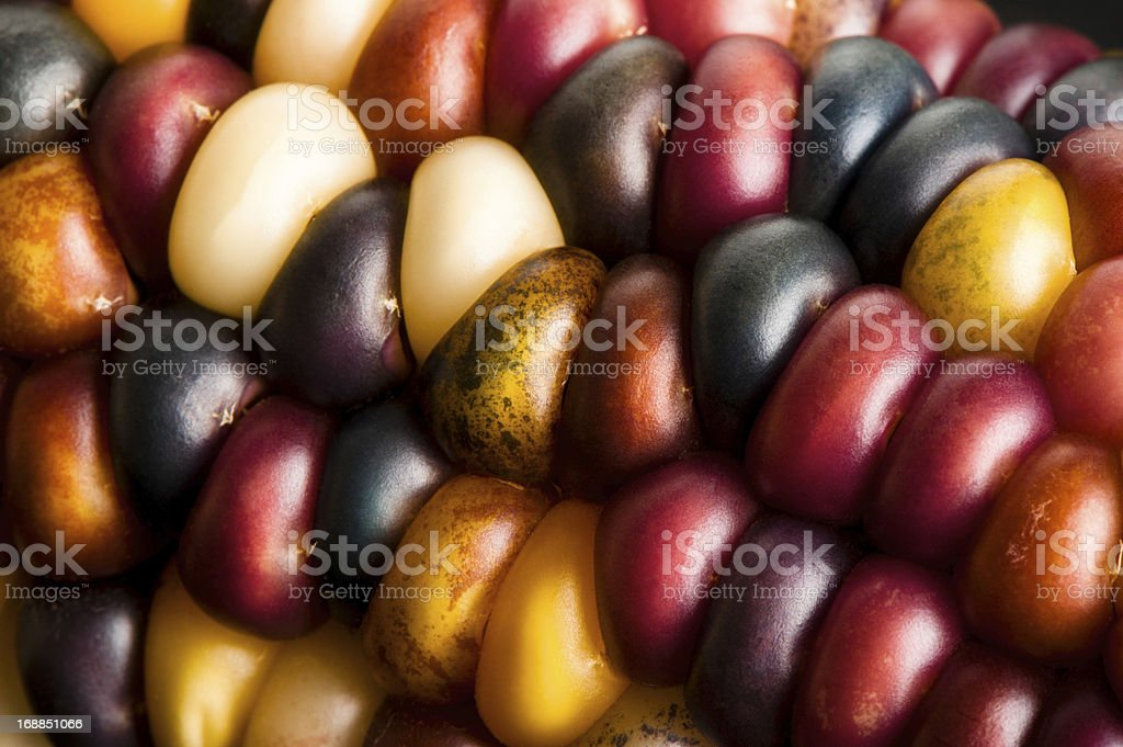 Indian Corn Close Up royalty-free stock photo