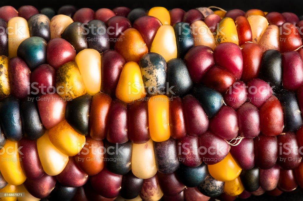 Indian Corn Close Up stock photo