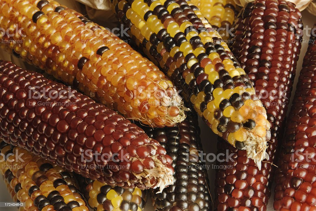 Indian Corn Close-up royalty-free stock photo