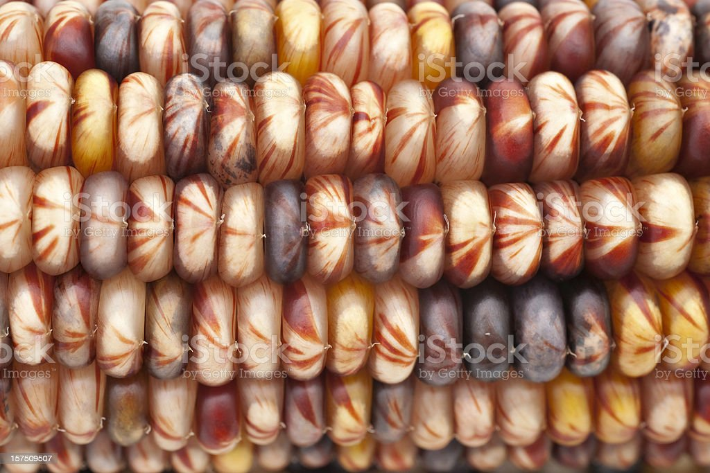 Indian corn dry royalty-free stock photo