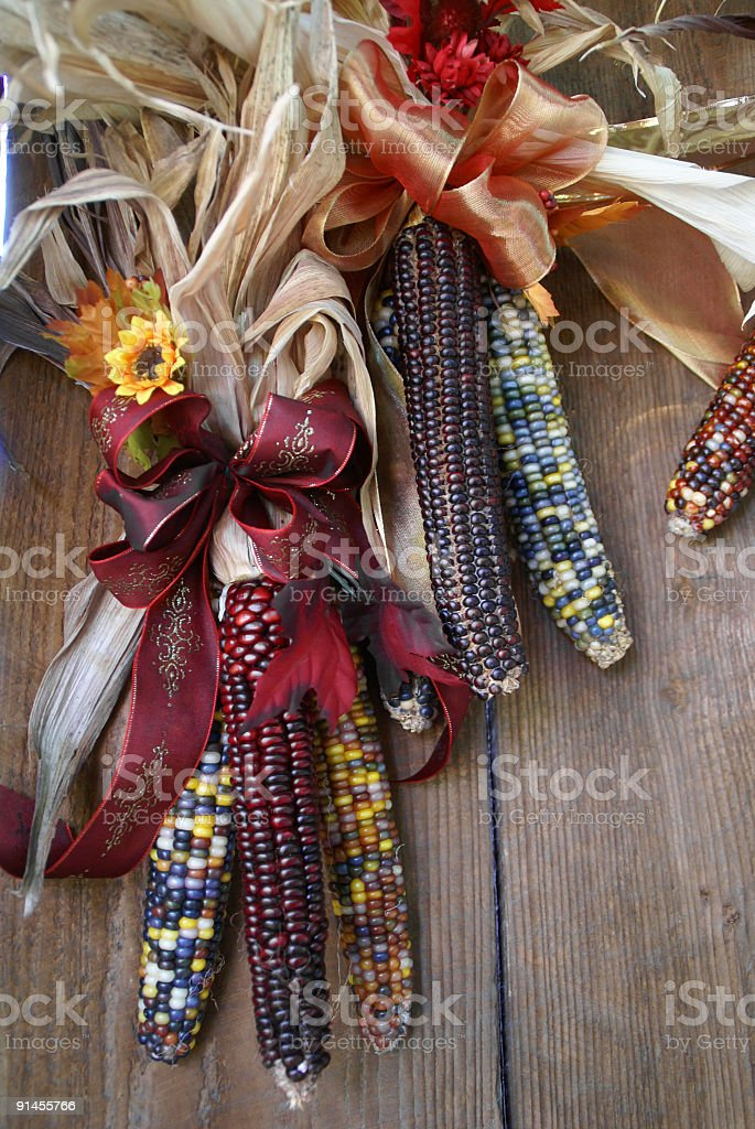 Indian Corn hanging on wood wall royalty-free stock photo