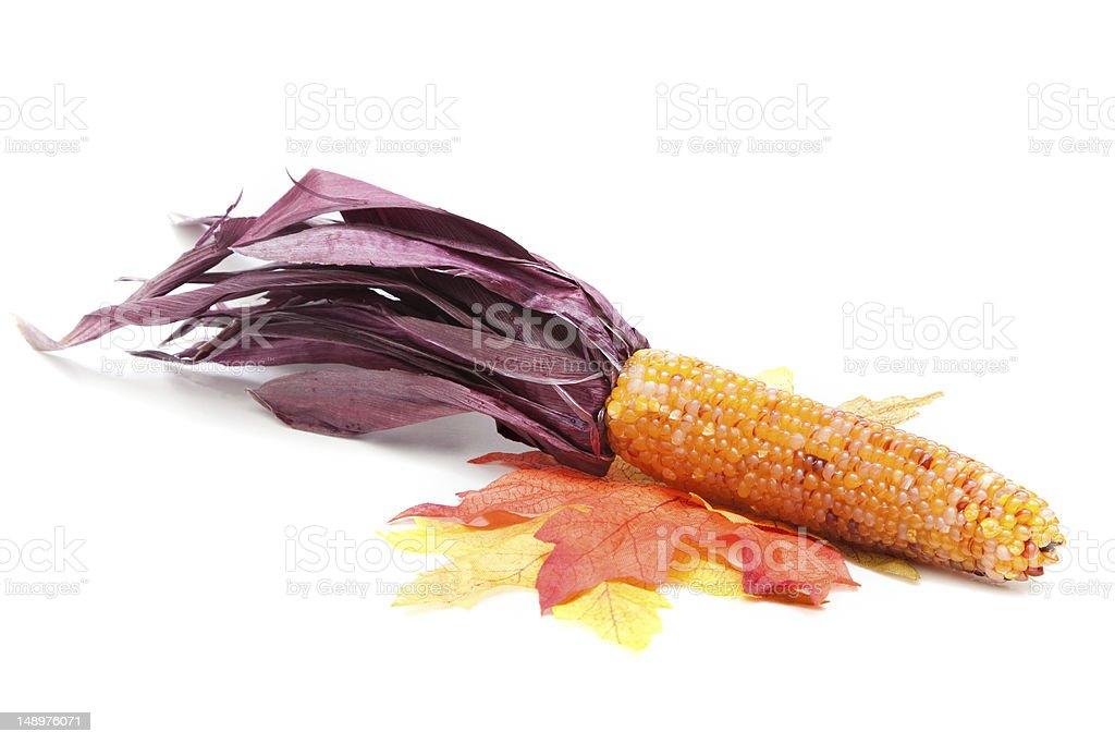 Indian Corn on Autumn Leaves stock photo