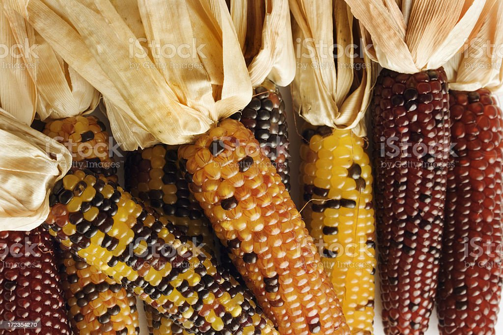 Indian Corn royalty-free stock photo