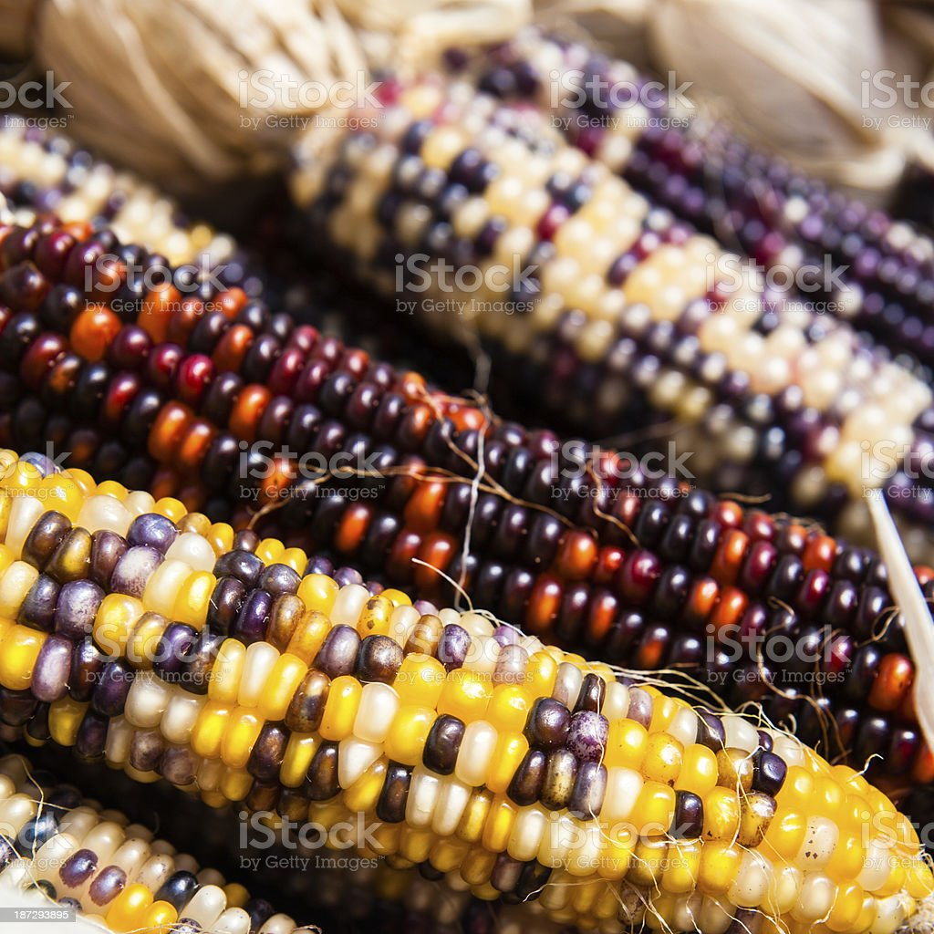 Indian corns on the country fair royalty-free stock photo