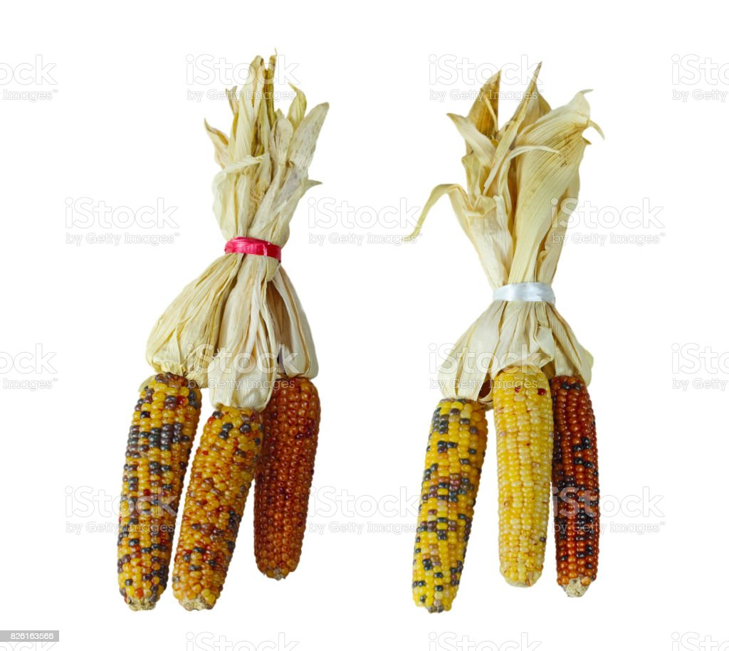 Indian Corns stock photo
