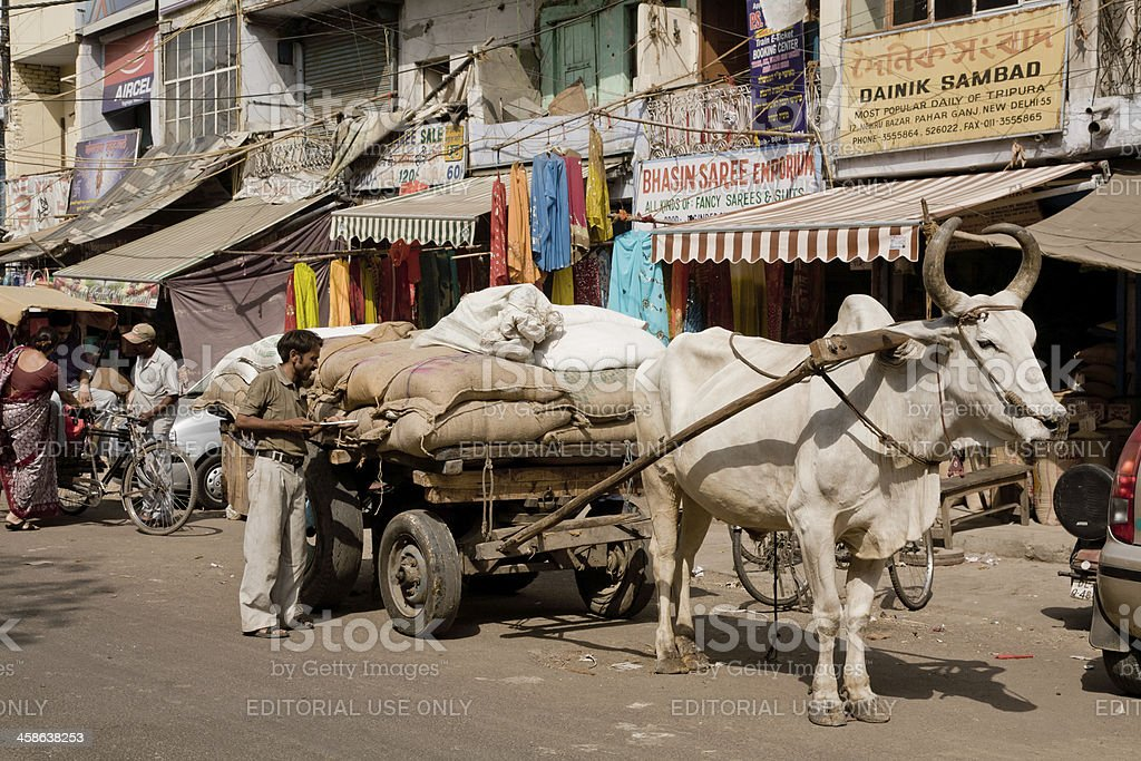 Indian cow at work royalty-free stock photo