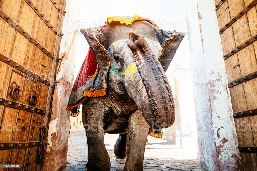 Indian Elephant Running Archway Amber Palace stock photo