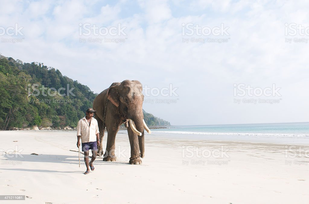 Indian elephant walking on beach stock photo
