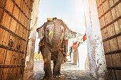 Indian Elephant Walking Through Amber Palace Entrance Jaipur