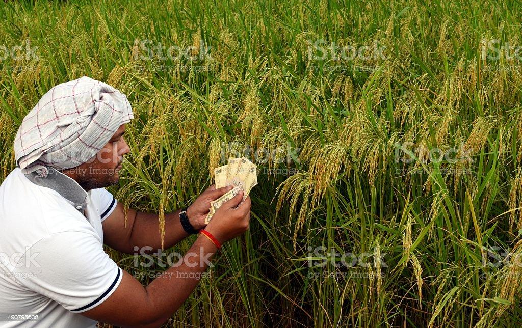 Indian Farmer in rice field stock photo