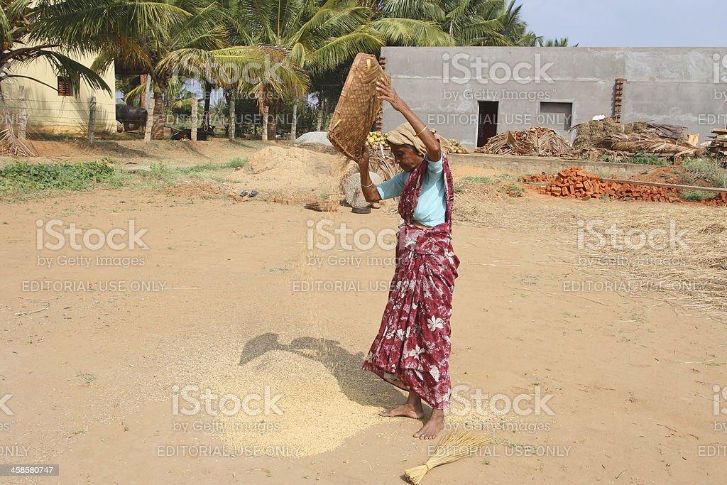 Indian farmer royalty-free stock photo