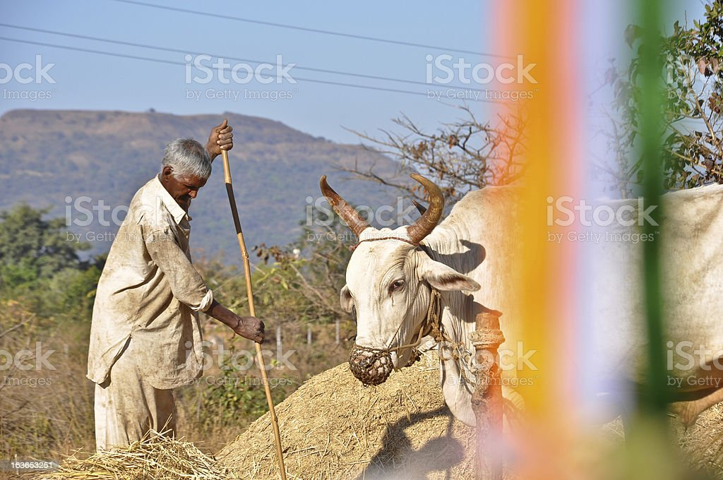 Indian farmer working behind india flag stock photo