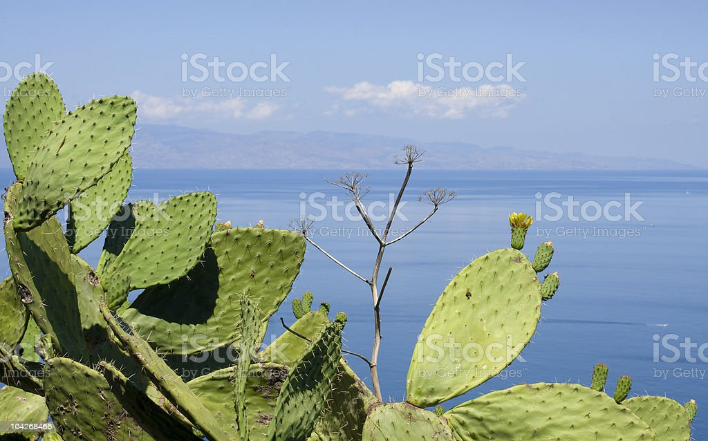 Indian figs against the blue sky and see of Taormina stock photo