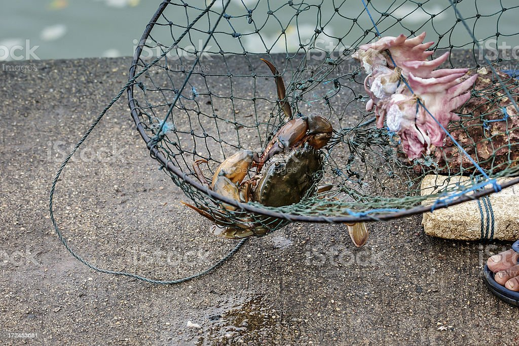 Indian fisherman with catch of fresh crab in net royalty-free stock photo